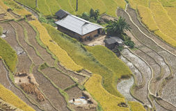 Asian village landscape in a rural area with paddy field. Typical image of an Asian village landscape in a rural area with paddy field in time of harvest under stock image