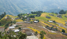 Asian village landscape in a rural area with paddy field Royalty Free Stock Photo