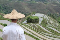 Asian villager in Asian rice terraces.  stock images