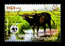 Asian Water Buffalo Bubalus arnee bubalis, World Wildlife Fund serie, circa 1986. MOSCOW, RUSSIA - DECEMBER 21, 2017: A stamp printed in Kampuchea Cambodia shows Royalty Free Stock Photography