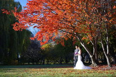 Asian Wedding couple in Nature pictures Royalty Free Stock Image