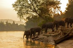 Asian wild family group Elephants walking in the natural river at deep forest royalty free stock photo