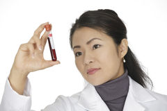 Asian woman laboratory technician examining a tube of blood  Royalty Free Stock Image