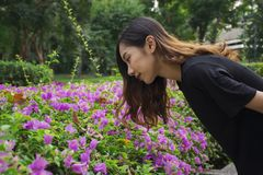 Asian woman bent down to look at the purple flowers Bougainvillea with public park background royalty free stock photos