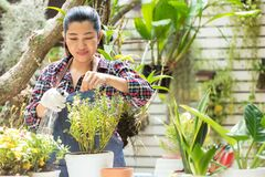 Free Asian Woman Care  Plant Flower In Garden. People Hobby And Freelance Gardening Indoor At Home, Nature Garden Background. Royalty Free Stock Photo - 216691115