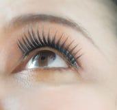 Asian woman eye Stock Photography