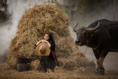Asian woman farmer with a buffalo in the field of the countryside of Thailand royalty free stock photo