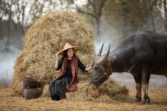 Asian woman farmer with a buffalo in the field of the countryside of Thailand, relationship royalty free stock image
