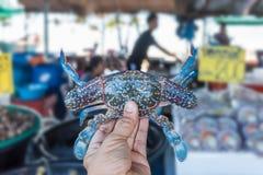Asian woman and flower crab at Thai seafood market. Asian woman plump body holding a fresh raw sea flower crab (portunus pelagicus) premium grade display for Stock Photo