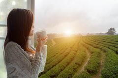 Asian woman fresh morning drinking hot tea and looking out of the window for see Tea Plantation and farm on sunny day. stock photos