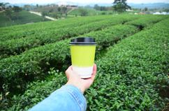 Asian woman hand hold hot paper green tea cup over green tea pla. Asian woman hand hold hot paper of green tea cup over green tea plantation background Royalty Free Stock Photography