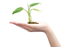 Asian woman with plant in hand Stock Photo