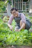 Asian woman planting organic vegetable in home garden Stock Photos