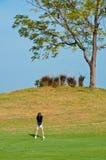 An asian woman plays golf Stock Photos