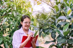 Free Asian Woman Researcher Analysis And Examining Plant With Study Data In The Garden Stock Photo - 166145400