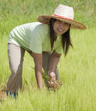 Asian woman in the rice field, Thailand Royalty Free Stock Photos