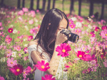 Asian woman smelling a cosmos flower Stock Photo