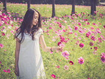 Asian woman smelling a cosmos flower Royalty Free Stock Photography
