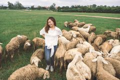 Woman standing among the sheep in green grass field at countryside farm stock image