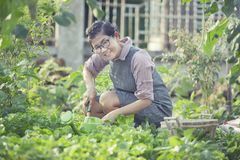 Asian woman toothy smiling face in home gardening working. Asian woman toothy   smiling face in home gardening working Stock Photos