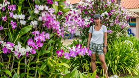 Asian woman surrounded by orchids stock images