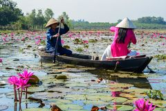 Asian woman on the wooden boat royalty free stock photography