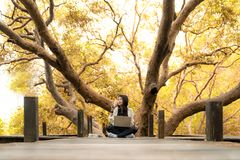 Asian women working and drinking coffee after education nature and forest input the laptop under big tree. Stock Image