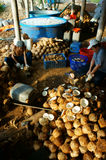 Asian worker, coconut, copra, material, Mekong Delta Stock Images