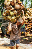 Asian worker, coconut fiber industry, Vietnamese Royalty Free Stock Photography