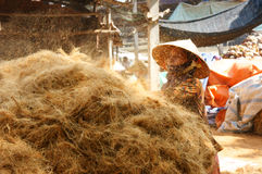 Asian worker, coconut, Vietnamese, coir, Mekong Delta Stock Image