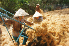 Asian worker, coconut, Vietnamese, coir, Mekong Delta Royalty Free Stock Images