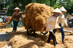 Asian worker, coconut, Vietnamese, coir, Mekong Delta Royalty Free Stock Photo