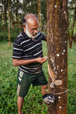 Asian worker in rubber tree plantation Stock Photography