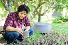 Asian young farmer planting stock images