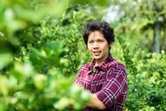 Asian young farmer standing in lime garden royalty free stock images