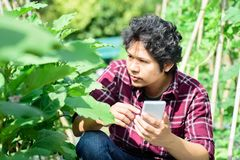 Asian young farmer using smartphone in agriculture royalty free stock photos