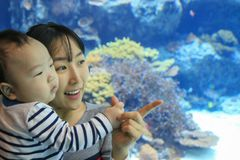 Asian young mother and her son enjoying aquarium. Asian young mother and her son watching colorful tropical fish stock image
