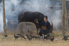 Asian young woman feeding chickens at Thailand Countryside,Thailand Stock Image