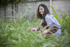 Asian younger woman toothy smiling face happiness emotion in hom. Asian younger woman toothy smiling  face happiness emotion in home gardening work Stock Photography