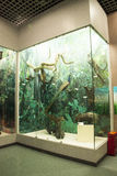 Asiat China, Peking, Peking naturhistorisches Museum Stockfotos