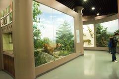 Asiat China, Peking, Peking naturhistorisches Museum Lizenzfreie Stockbilder