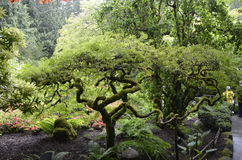 Asiat inspirerad trädgård Arkivfoton