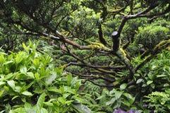 Asiat inspirerad trädgård Arkivfoto
