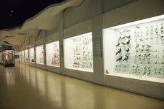 Asiat Kina, Peking, nationella djura Museumï ¼ŒAnimal prover Arkivbild