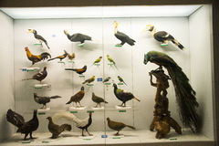 Asiat Kina, Peking, nationella djura Museumï ¼ŒAnimal prover Royaltyfri Foto