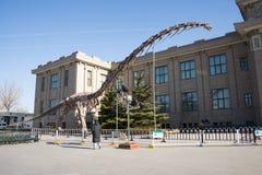 Asiat Kina, Peking, Pekingmuseum av naturhistoria Arkivfoton
