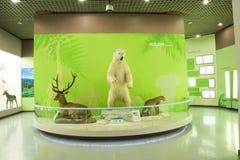 Asiat Kina, Peking, Pekingmuseum av naturhistoria Arkivbild