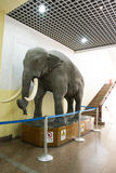 Asiat Kina, Peking, Pekingmuseum av naturhistoria Royaltyfria Foton