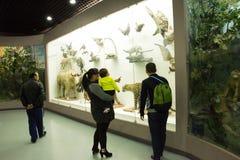 Asiat Kina, Peking, Pekingmuseum av naturhistoria Royaltyfria Bilder