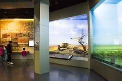 Asiat Kina, Peking, Pekingmuseum av naturhistoria Arkivfoto